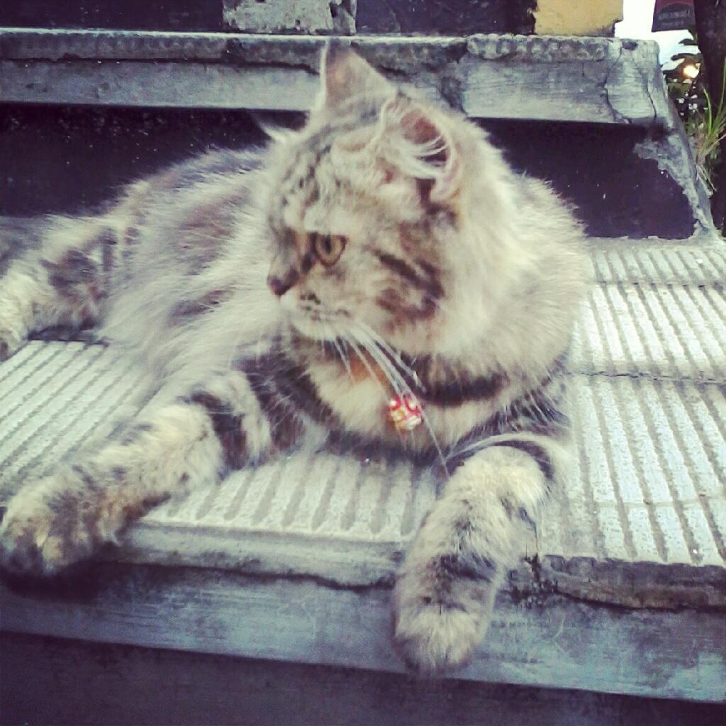 3 Hal Yang Menjengkalkan Dari Kucing Kucingku Catatan Kecil