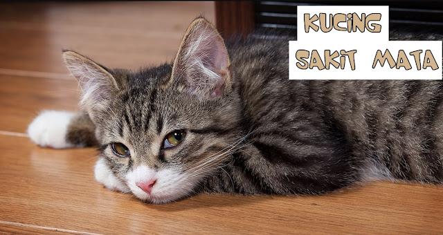 Cara Mengobati Kucing Sakit Mata