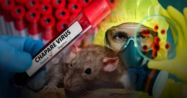 Ο ιός «Τσαπάρε» προέρχεται από ζώα, μεταδίδεται από άνθρωπο σε άνθρωπο και δεν έχει θεραπεία! (βίντεο)