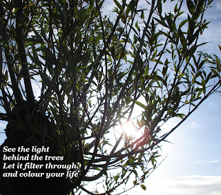 Remembering the why - photo of the branches of a tree with the sun behind