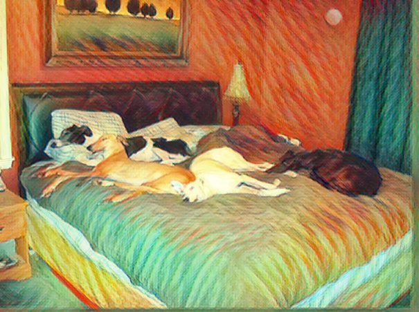 Собака в доме – эзотерический метод для улучшения благосостояния и психического здоровья