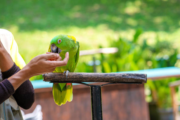 Training Your Parrot - A How To Guide