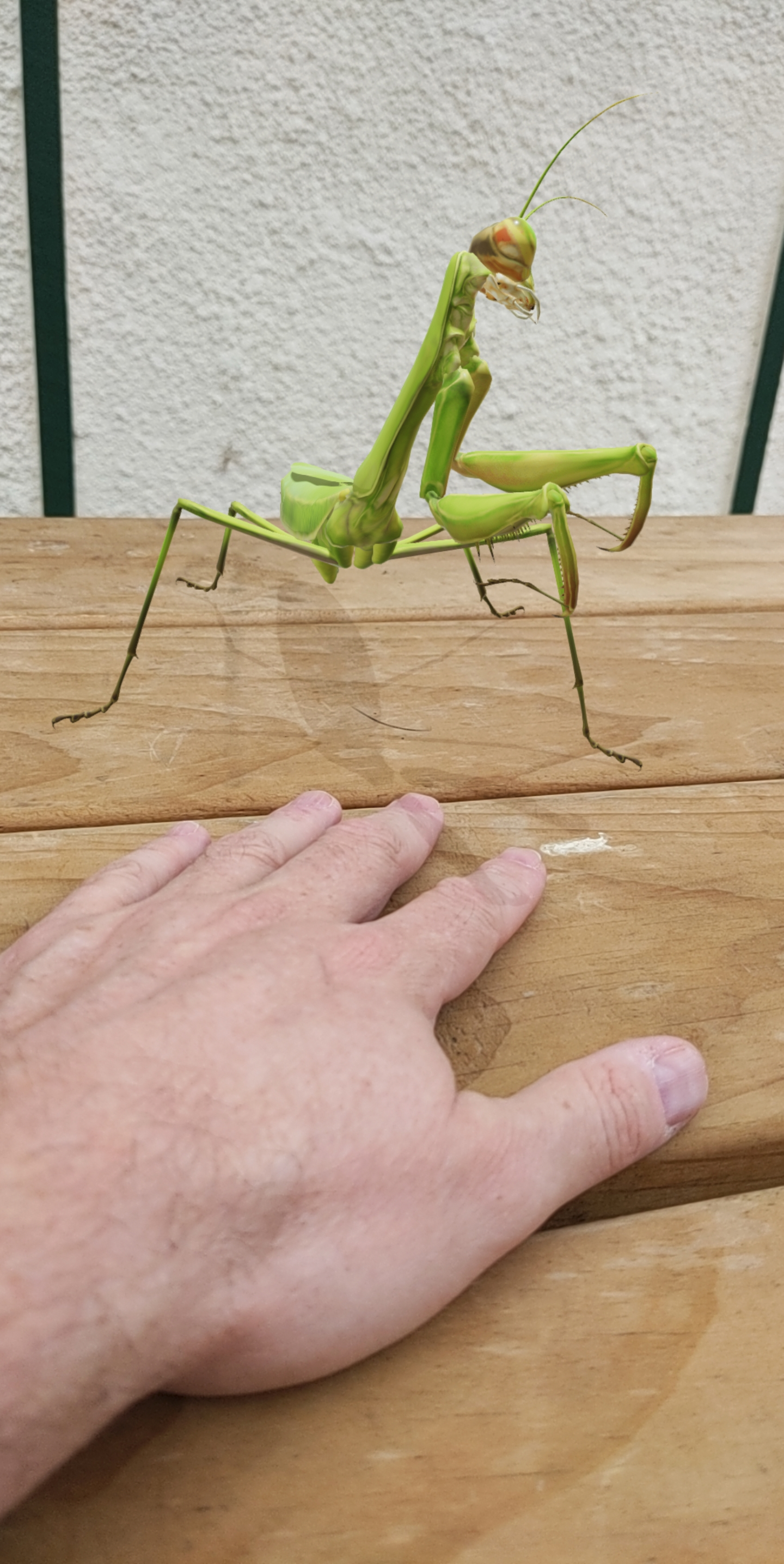 3D Praying Mantis in situ - Google search and get one yourself