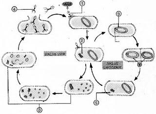 SOAL-BIOLOGI-SMA-KELAS-X