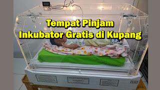 pinjam inkubator gratis di kupang