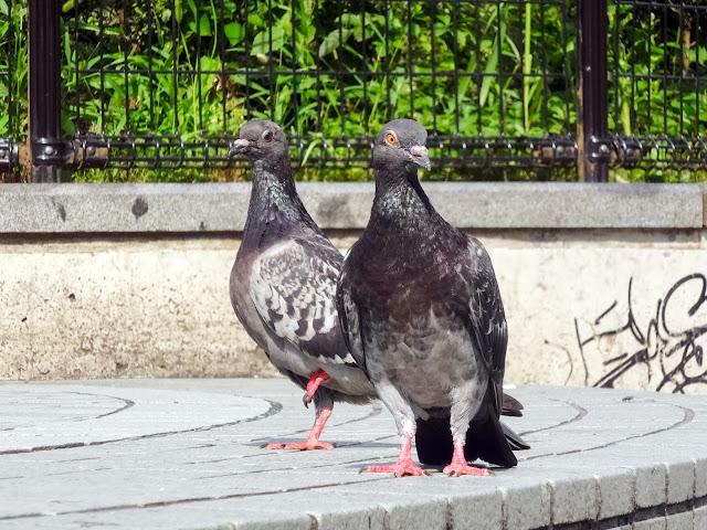 鳩,鳥,新宿駅前〈著作権フリー無料画像〉Free Stock Photos