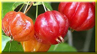 gambar buah omuboro