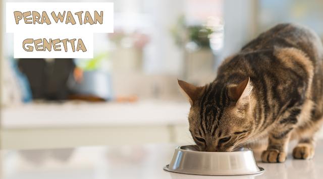 Perawatan Bulu Kucing Genetta