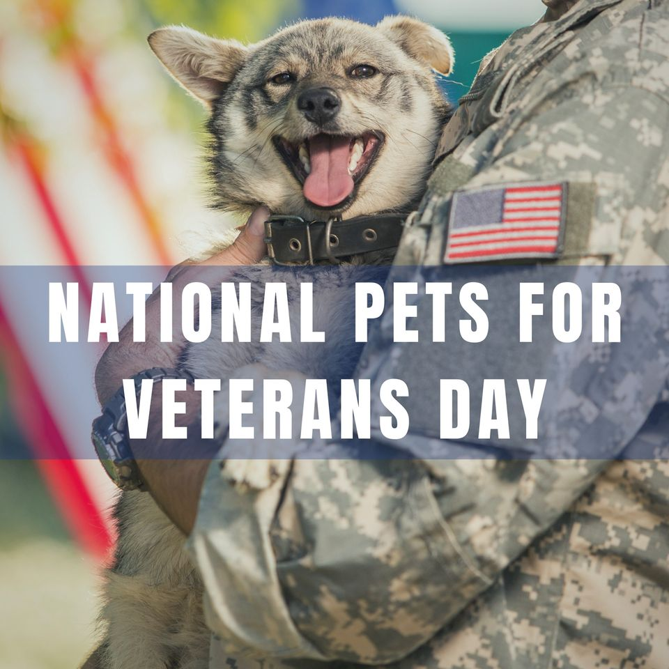 National Pets for Veterans Day Wishes Photos