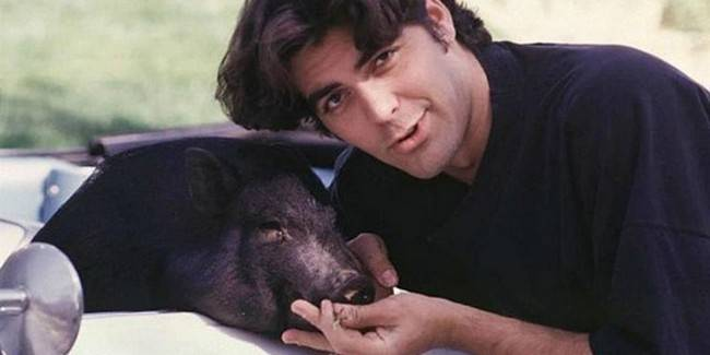 Actor George Clooney had a Vietnamese pig named Max, who died at age 18 in 2006.