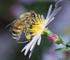 insects are important pollinators