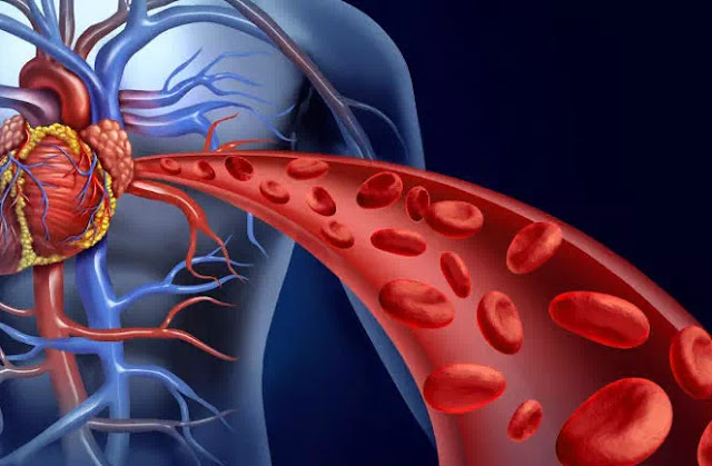 Blood vessels are comprised of three layers or tunics: intima, media, and adventitia. In large arteries close to the heart, the tunica media contains high amounts of elastin to buffer the heart's pulsatile output. Smaller musculararteries distribute blood to organs and capillary beds; their contractions are mediated by both the sympathetic nervous system (SNS) and by humoral factors. Endothelial cells lining the vascular lumen secrete vasoactive substances that regulate relaxation and contraction of the underlying smooth muscle.