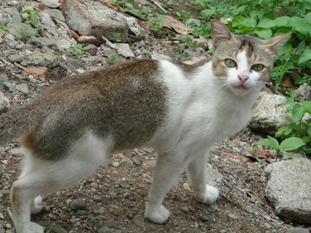 Kucing Rumahan