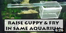 How to Install a Breeder Net in Aquarium