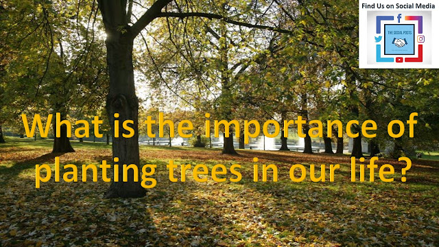 Why planting of trees are important in our life?