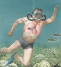 10 Risiko Olahraga Menyelam dan Tips Mengatasinya