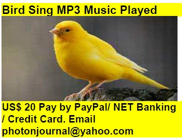 Bird Sing MP3 Music Played bird story book