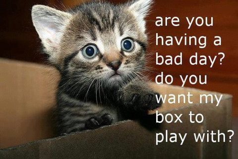 21 Inspirational Quotes From Kittens |Cute Kittens Quotes