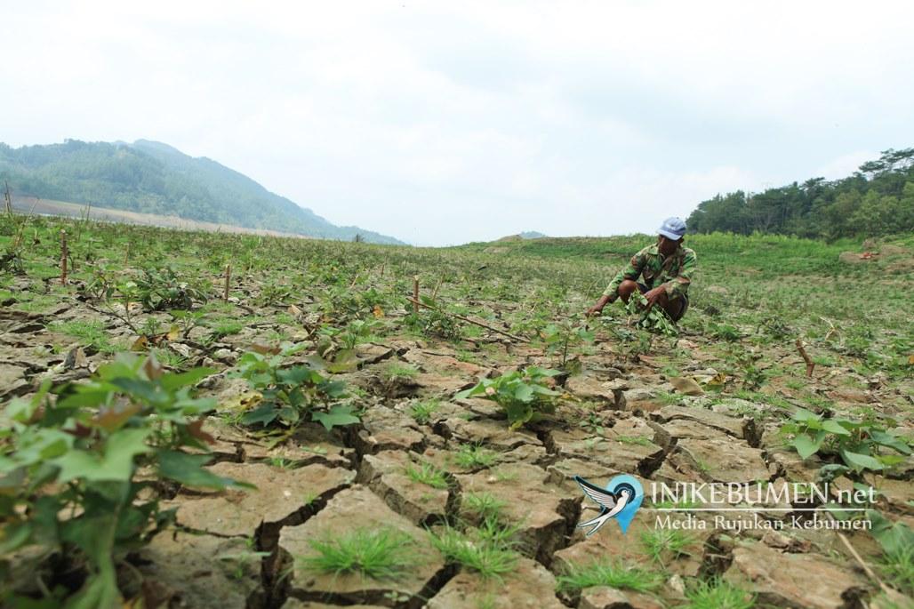 Hujan Tak Kunjung Turun, Volume Air Waduk Sempor Susut Hingga 96 Persen