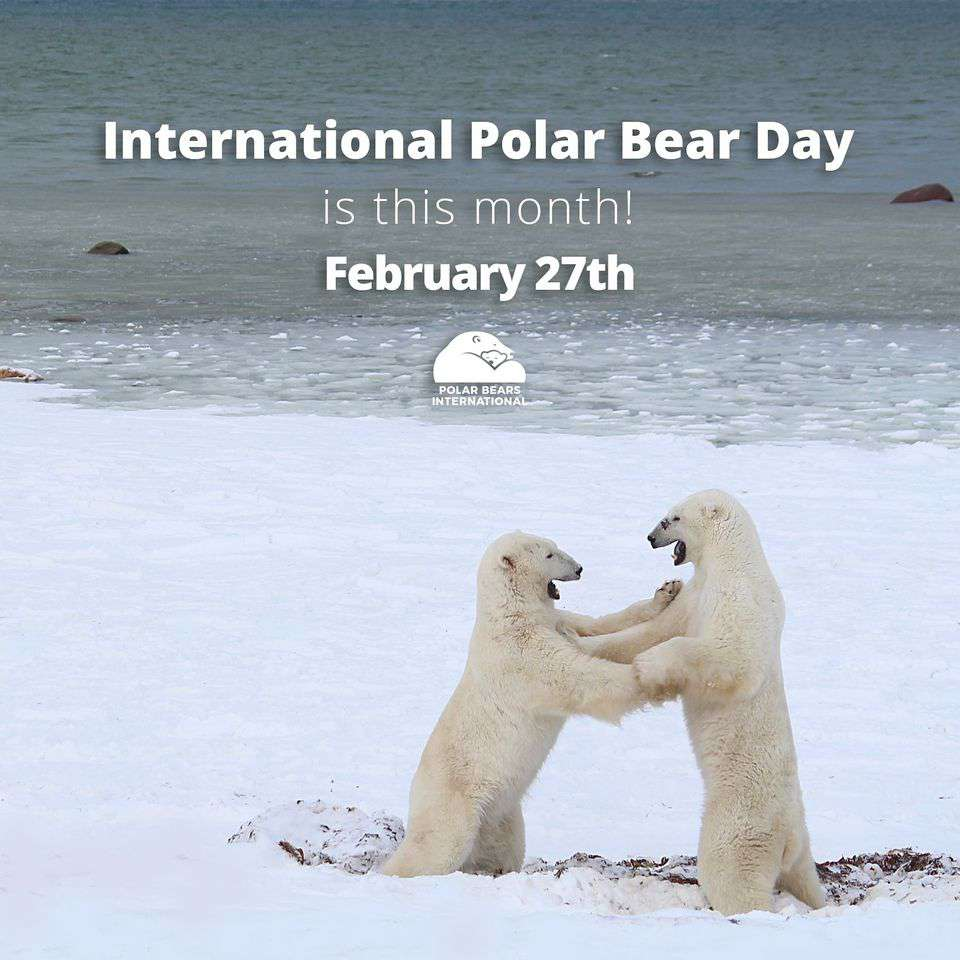 International Polar Bear Day Wishes Awesome Picture