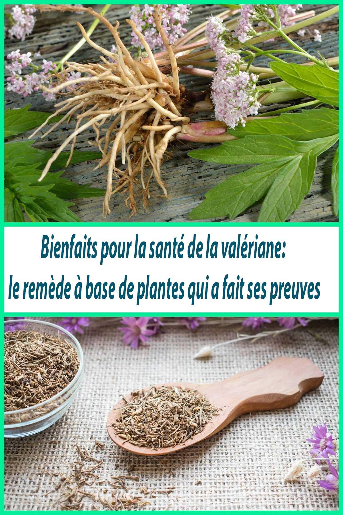 Bienfaits pour la santé de la valériane: le remède à base de plantes qui a fait ses preuves