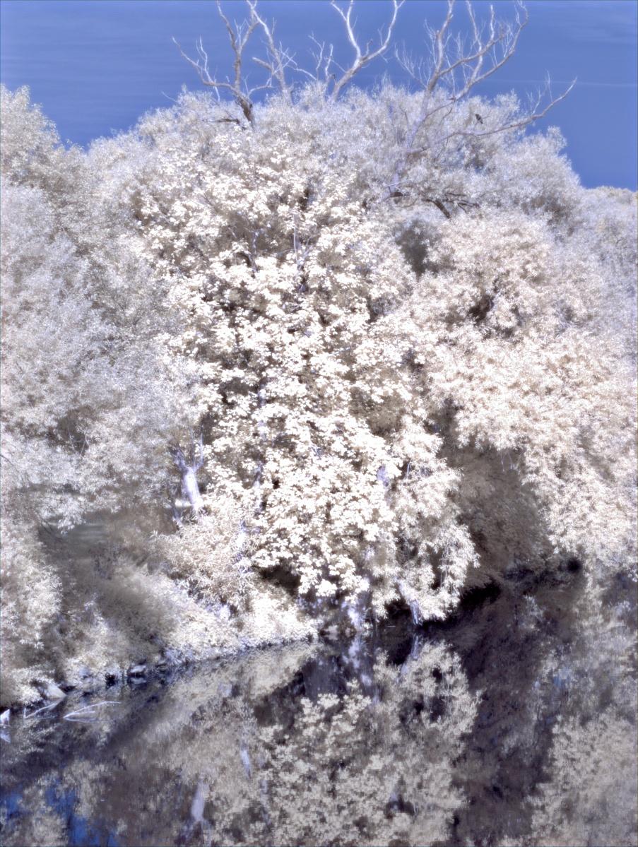 Bäume am Neckar
