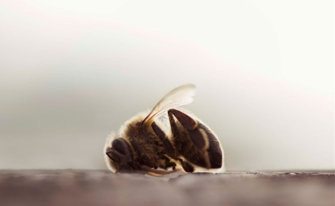 Insectos, obrera, miel,