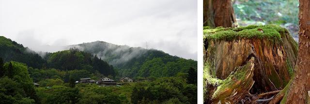 帰り道の風景と御神木の切り株