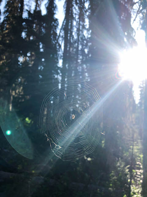 Spider Web on the Gunsight Pass Trail