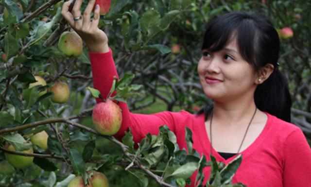 Wisata Petik Apel Malang