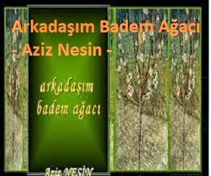Arkadaşım Badem Ağacı şiiri - Aziz Nesin