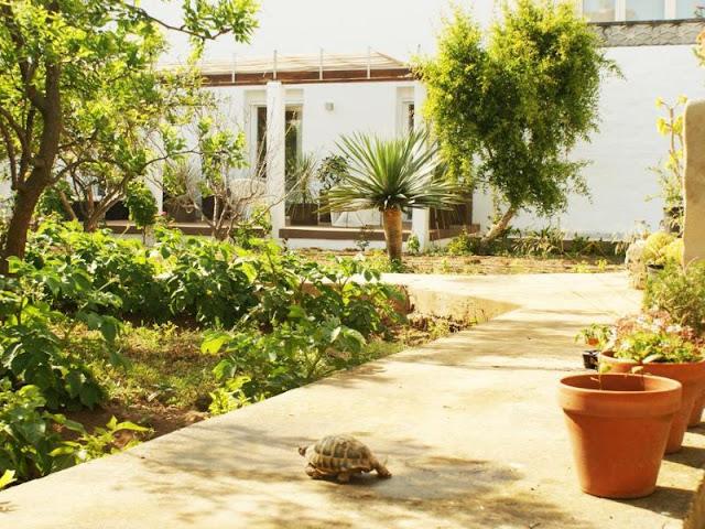 Abril 37 (Ciudadela, Menorca)