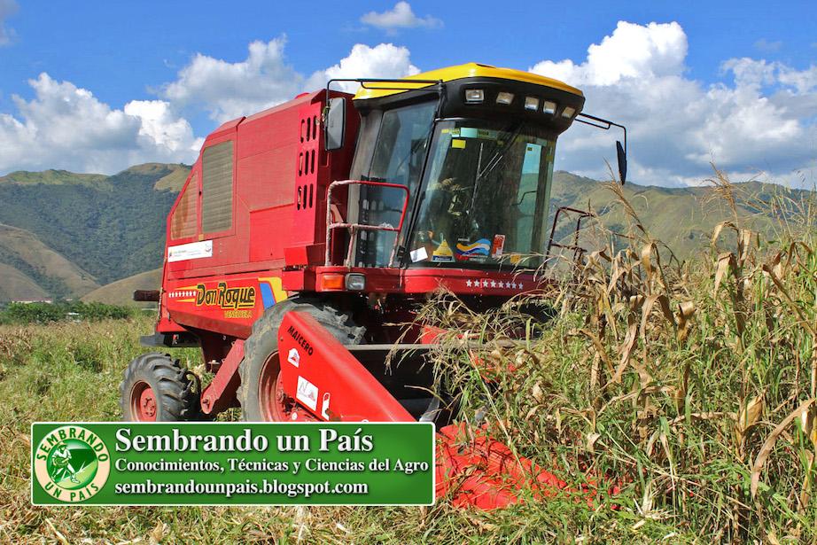 cosecha de maíz con maquinaria
