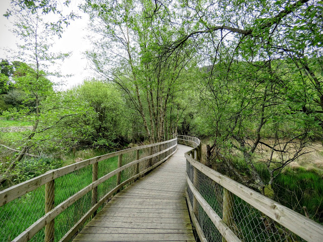 Wicklow Mountains Tour - Boardwalk along the Lower Lake at Glendalough