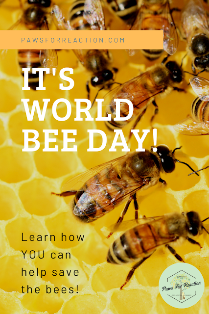 May 20 is World Bee Day: How you can protect the bees