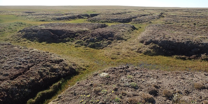 Using The Past To Unravel The Future For Arctic Wetlands