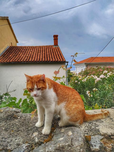 Chorwackie koty na wyspie Krk, gdzie spotkać