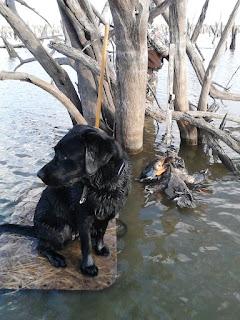 north texas duck hunts|north texas retriever trainers