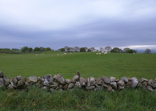 Stone walls and green fields under a deep gray sky, before dusk, Wigtown, Scotland