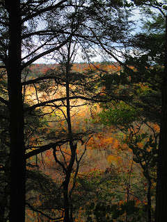World's End State Park, fall, forest