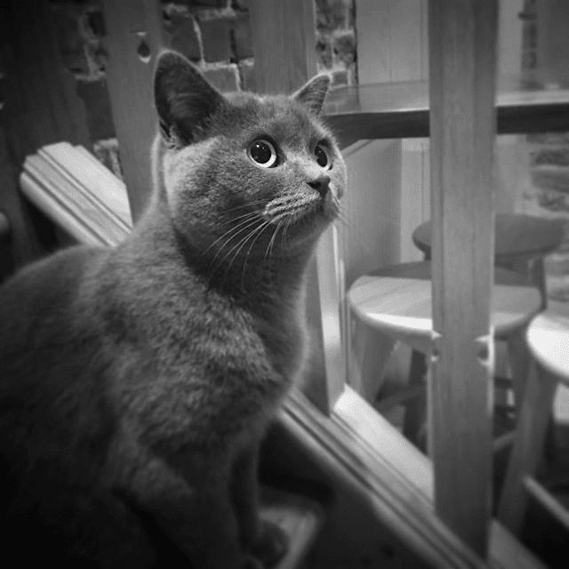 Ashley Riches' cat, Leonora Rubenstein (Photo courtesy of Ashley Riches)