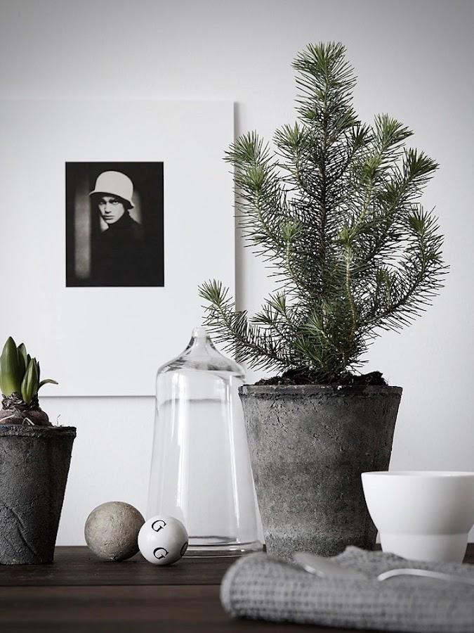 5 árboles de Navidad low cost