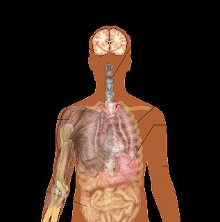 Gejala Penyakit Ebola