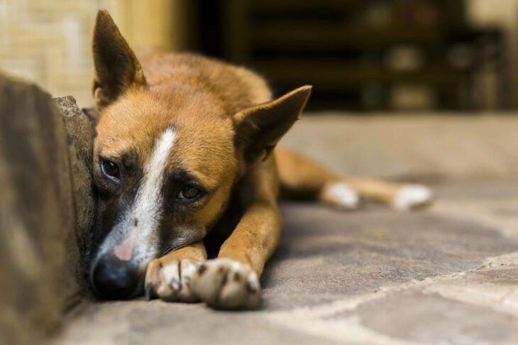 El fin de la pandemia causará el abandono de miles de mascotas en todo el mundo