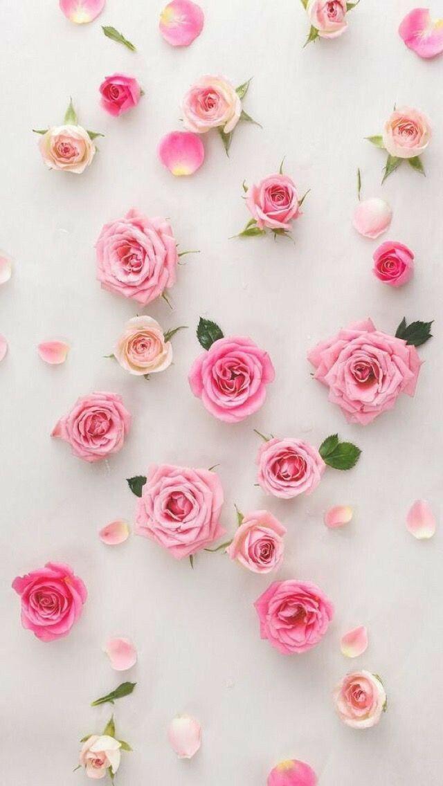 Lindas Flores Rosas Plano De Fundo Celular