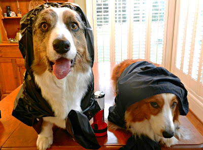 dogs prepare for hurricane