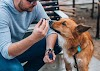 The 5 Best Pet Insurance Companies 2021 - Dog Breeds Fact