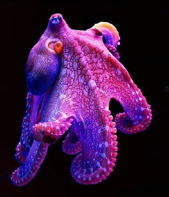 octopus photo 3