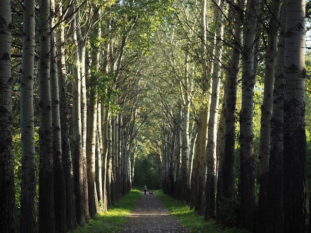 Новосибирский дендропарк – аллея (Novosibirsk Arboretum – Alley)