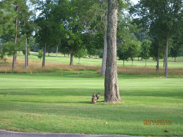 Vestavia Country Club Golf Course Maintenance July 2012